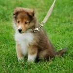 犬の血統書って何のため?義務なの?血統書つきの利点とは?